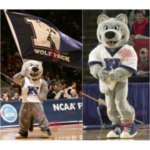 Grijze wolf mascotte op zoek woest - Redbrokoly.com