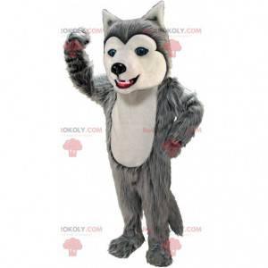 Graues und weißes Husky-Maskottchen, haariges Wolfshundekostüm