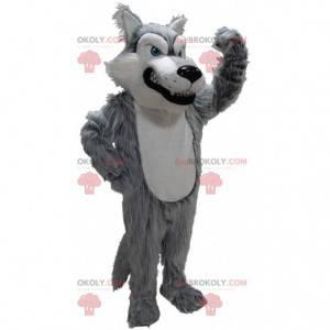 Šedý a bílý vlk maskot, kostým špatně chlupatého vlka -