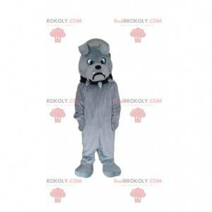 Grå bulldog maskot ser surr, grå hundedrakt - Redbrokoly.com