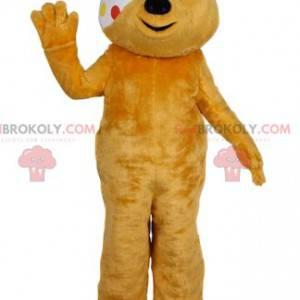 Gelbes Bärenmaskottchen mit einem Verband. Gelbes Bärenkostüm -