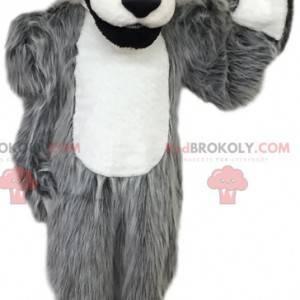 Mascote de lobo cinzento e branco. Fantasia de lobo -