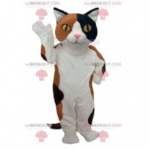 Very successful black and brown white cat mascot -
