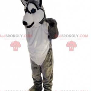 Graues und weißes husky Maskottchen lächelnd. Wolfskostüm -