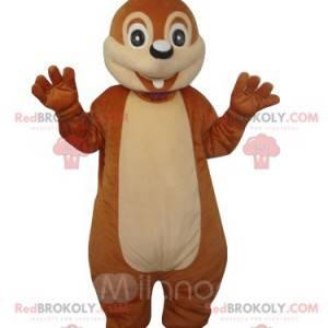 La mascotte dello scoiattolo è stupita. Costume da scoiattolo -