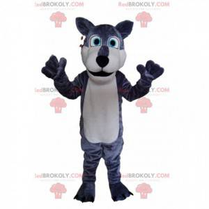 Gray and white wolf mascot, with bright blue eyes! -