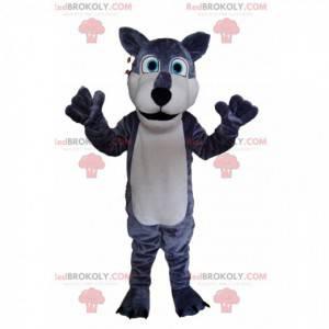 ¡Mascota lobo gris y blanco, con ojos azules brillantes! -