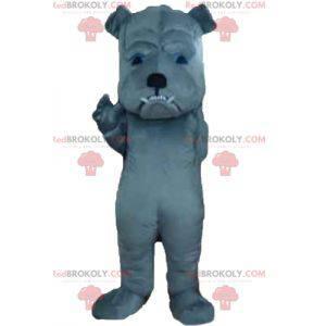 Graues Hundemaskottchen, das heftig aussieht - Redbrokoly.com