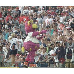 Celý maskot žlutých a růžových ptáků - Redbrokoly.com