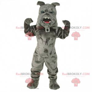Pets mascot - Bulldog with collar - Redbrokoly.com