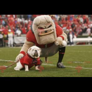 Sehr muskulöses beige Bulldog Maskottchen - Redbrokoly.com
