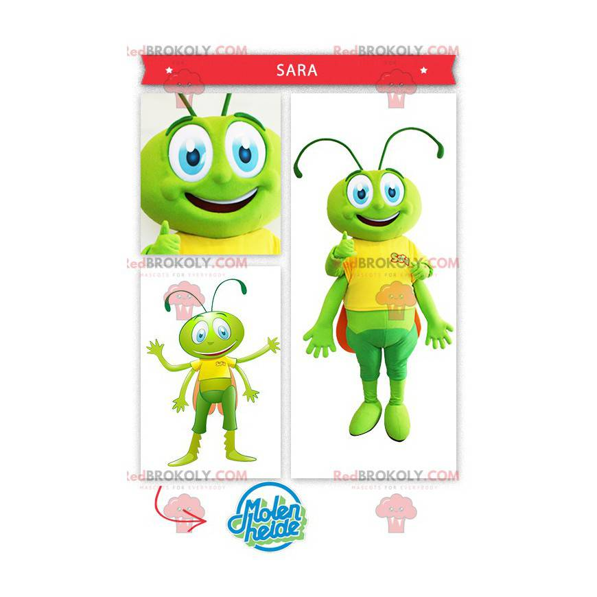 Zelená kobylka kobylka maskot - Redbrokoly.com