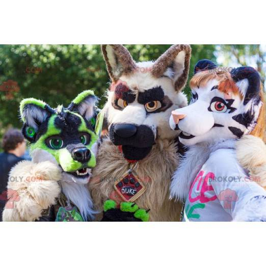 3 hairy and colorful dog mascots - Redbrokoly.com