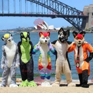 5 barevných psích kočičích maskotů - Redbrokoly.com