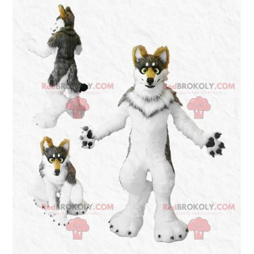 Hairy tricolor dog mascot - Redbrokoly.com