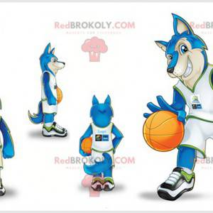 Wolf maskot kledd som en basketballspiller. Blå ulv -