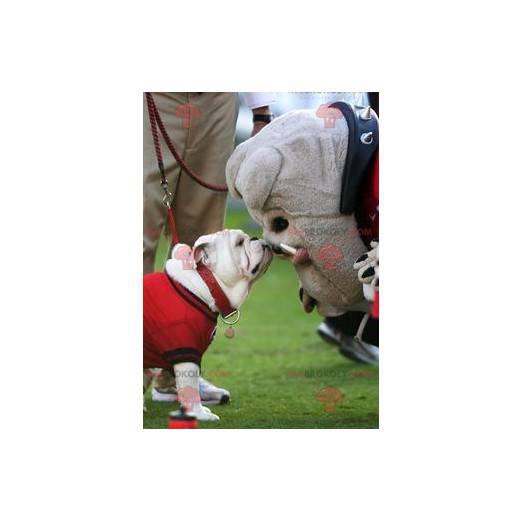 Graues Bulldoggenhundemaskottchen - Redbrokoly.com