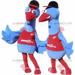2 Maskottchen von blauen Vögeln. 2 Straußenkostüme -