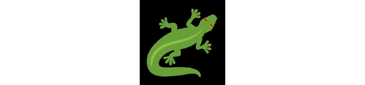 Reptilienmaskottchen - Maskottchenkostüme Redbrokoly.com