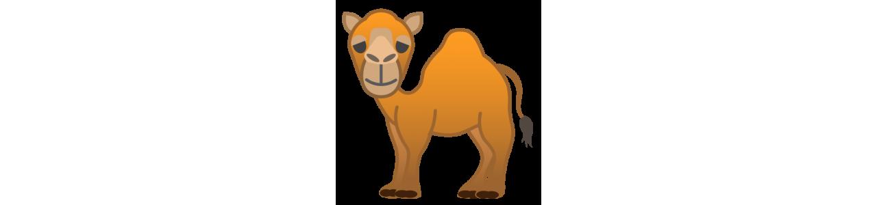 Mascotte kamelen / dromedarissen - Mascottekostuums Redbrokoly.com