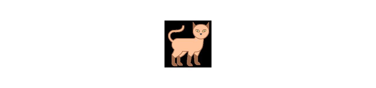 Mascotes de gatos - Fantasias de mascote em Redbrokoly.com