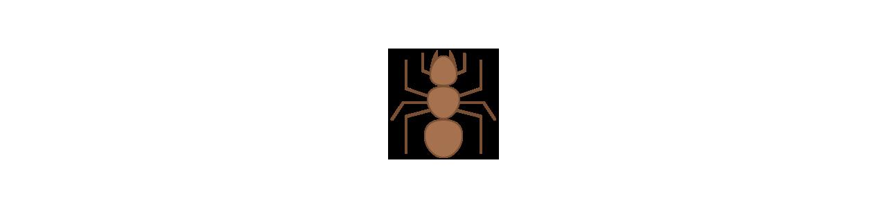 Mascotes de formigas - Fantasias de mascote em Redbrokoly.com