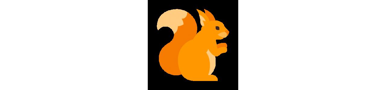Mascotes de esquilo - Fantasias de mascote em Redbrokoly.com