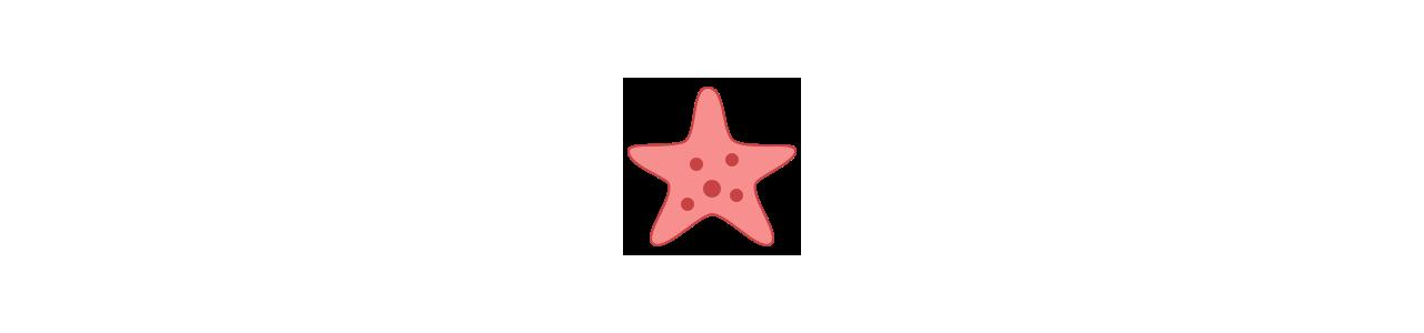 Mascotes de estrelas do mar - Fantasias de mascote em Redbrokoly.com